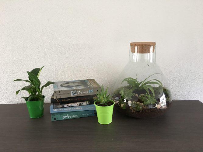 mini-ecosysteem diy