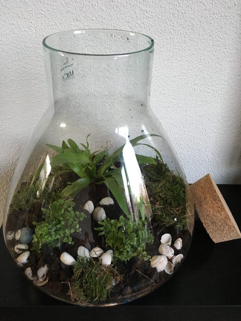 Maak een eigen plantenterrarium