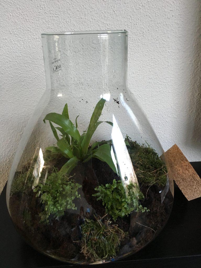 maak je eigen mini ecosysteem