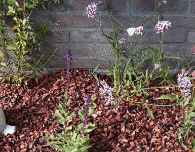 Kattenstront In Tuin : Kattenpoep in de tuin images metsfansgoods