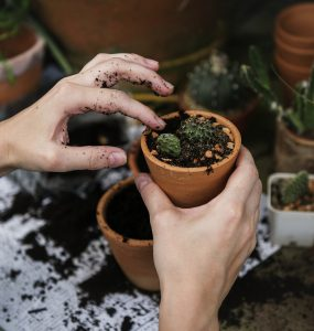 planten planten
