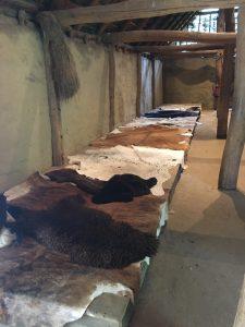 koeienhuiden in het preHistorisch Dorp Eindhoven