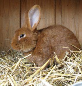 schoonmaken konijnenhok