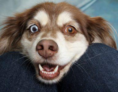 oppervlakkige hondenbeet